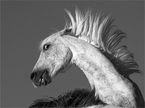 304-Fiesty-stallion.jpg