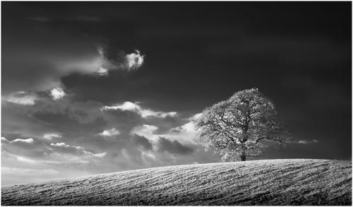 330-Lonely-Tree-on-the-Hill.jpg