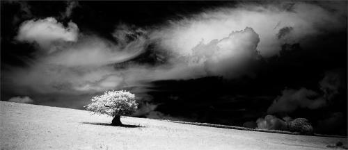 110-Lone-Tree.jpg