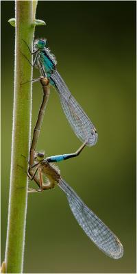 238-The-Mating-Game.jpg