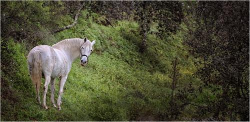 303-Horse-on-a-Hillside.jpg
