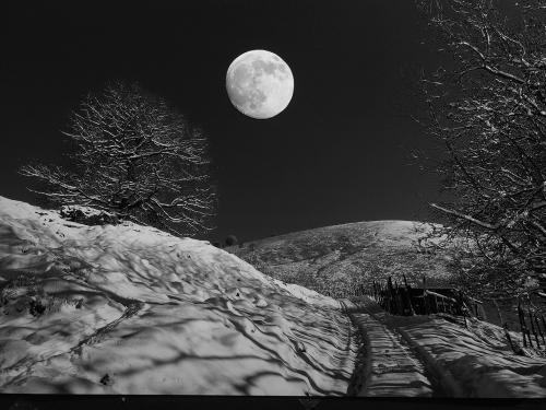 313-Moon-Rise.jpg