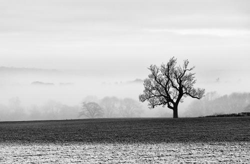 103 Winter Landscape.jpg