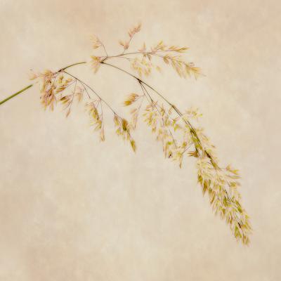 319 The Grass.jpg