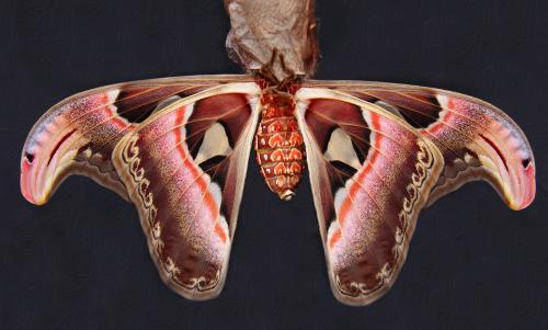 332 Birth of a Butterfly.jpg