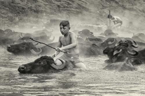 419 Water Buffalo Riders.jpg